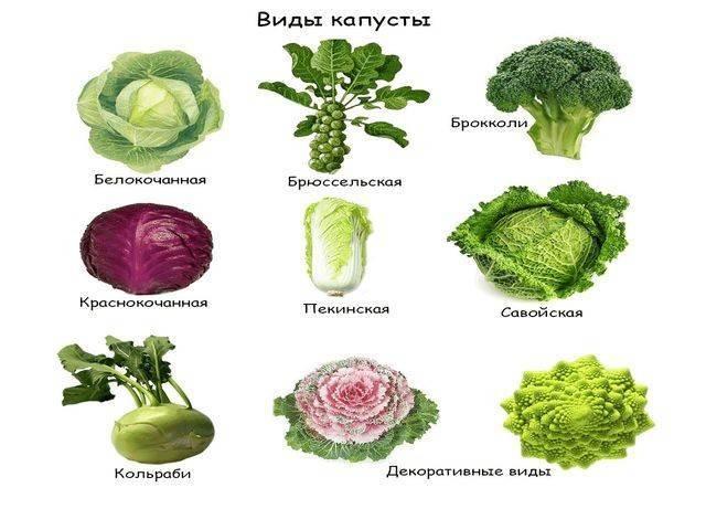 Лучшие сорта картофеля, томатов, сладкого перца, огурцов, капусты для сибири   красивый дом и сад