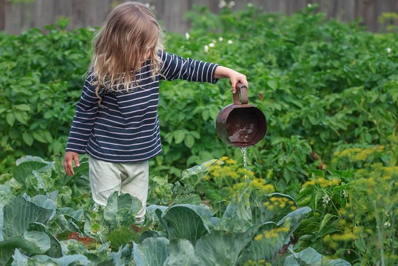 Удобрения для капусты — особенности и правила применения