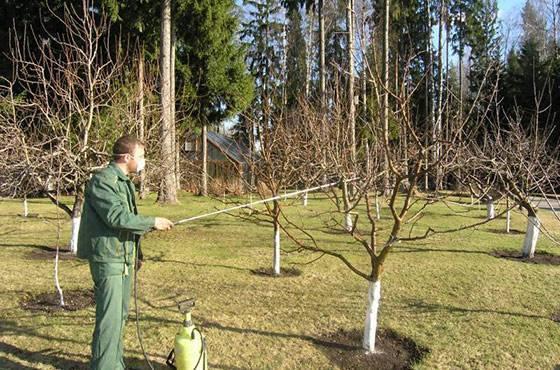 Обработка сада весной от болезней и вредителей ранней весной
