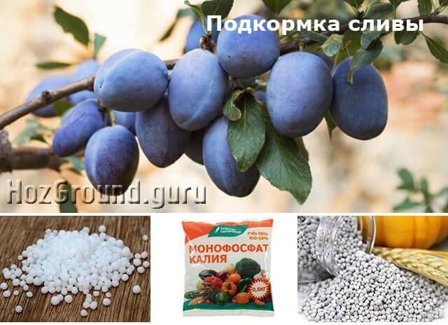 Подкормка плодовых деревьев и кустарников весной и удобрение почвы - pocvetam.ru