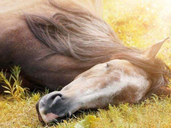 Почему и какие животные спят стоя