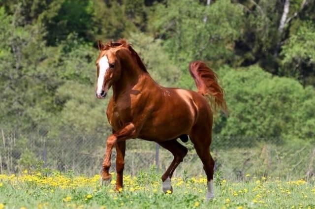 Донская лошадь — википедия. что такое донская лошадь