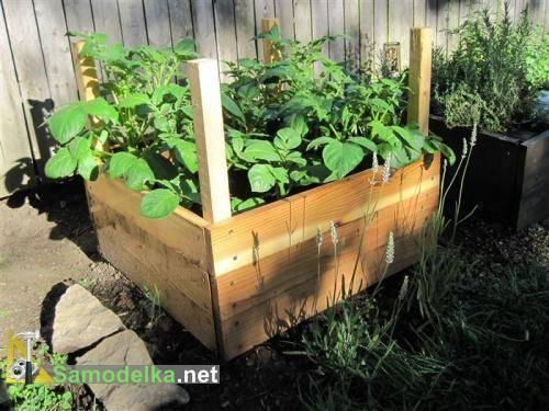 Выращивание картофеля в мешках: технология пошагово, плюсы и минусы, необходимые условия, а также сравнение с посадкой овоща в бочки и ящики