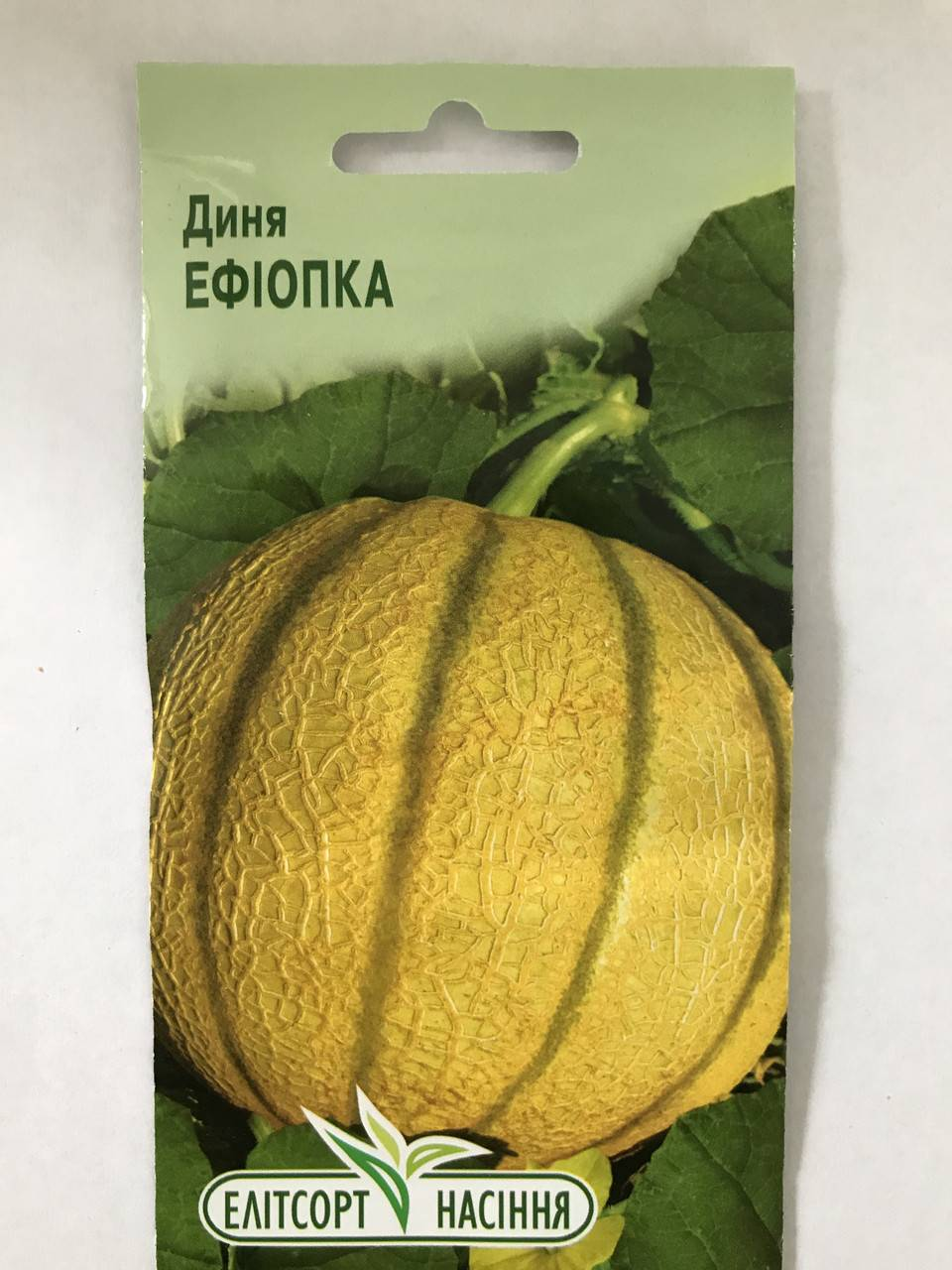 Выращивание дыни эфиопка, отзывы