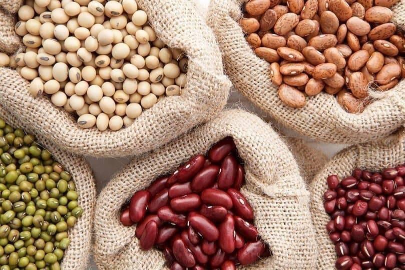 О видах и сортах фасоли: какие бывают, агротехника выращивания бобового растения