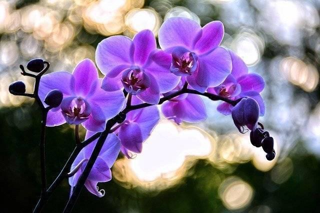 Растения весенних цветников и их названия (63 фото): какие цветы часто встречаются и как ими оформить клумбу