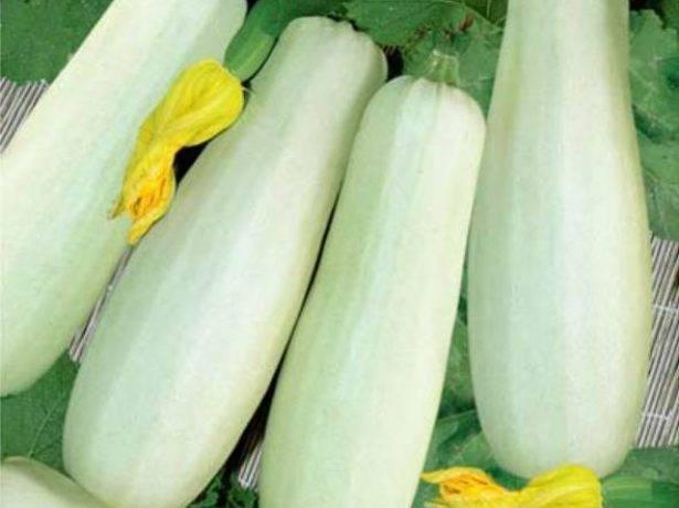 Особенности выращивания кабачка для реализации