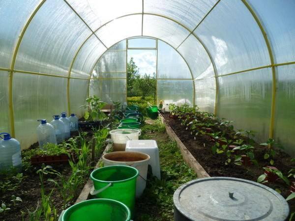 Посадочные дни для огурцов для теплиц на 2020 год и подходящие сорта