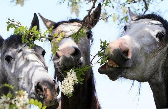 Особенности разведения лошадей