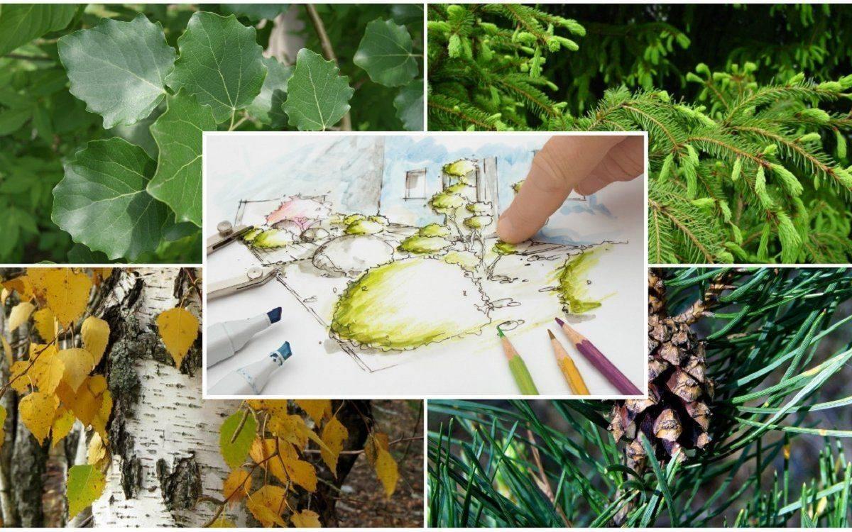 Что можно посадить рядом с вишней в открытом грунте