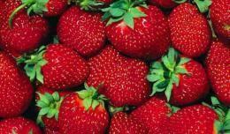 Лучшие ранние сорта клубники – 11 вариантов для сладкоежек