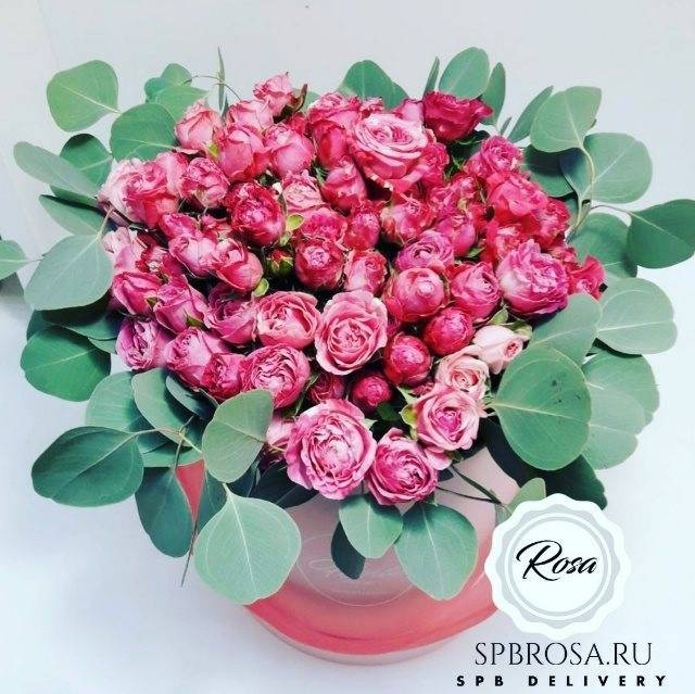 Розы, цветущие весь сезон – описания лучших сортов (21 фото)
