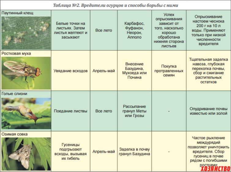 Как защитить огурцы от вредителей? советы от эксперта!
