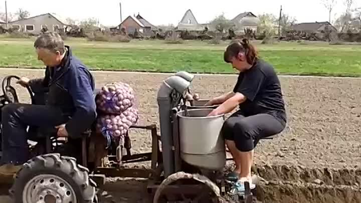 Посадка картофеля минитрактором картофелесажалкой