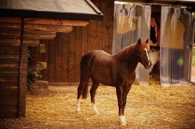 Размер стойла для лошади