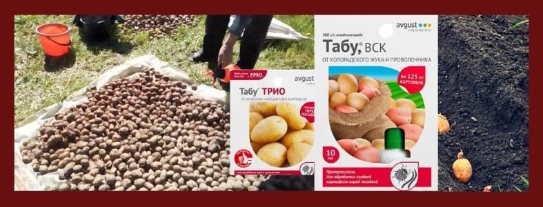Средство от колорадского жука табу: инструкция по применению