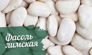 Волшебные бобы», доступные каждому, или чем полезна фасоль при беременности?