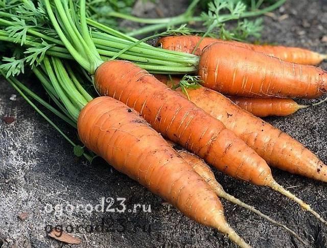 Сроки посадки моркови и свеклы весной по лунному календарю 2020 года