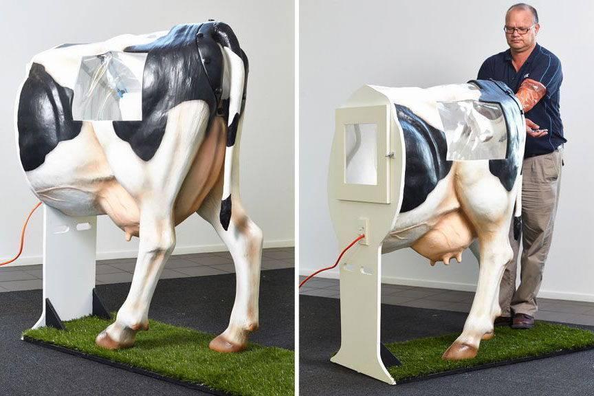 Причины низкой результативности осеменения коров