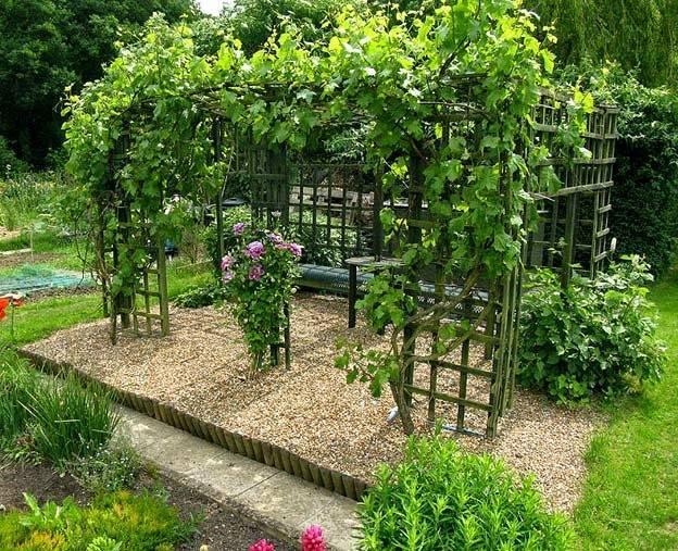 Справка: садоводу о совместимости растений, чередовании посадок на садовом участке