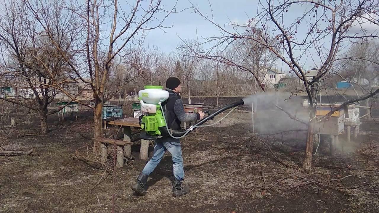 Обработка яблонь весной 2019 от болезней