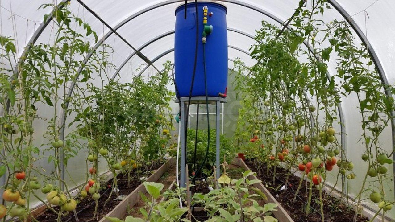 Капельный полив для теплицы из бочки: системы со схемами и видео