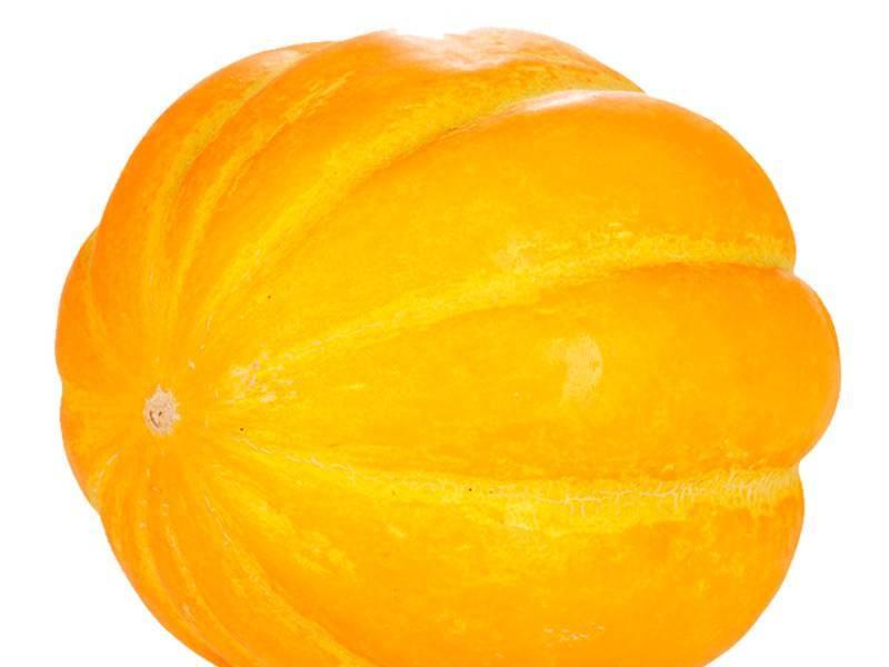 Дыня канталупа – вкусная или нет, как выбрать, вырастить и хранить?