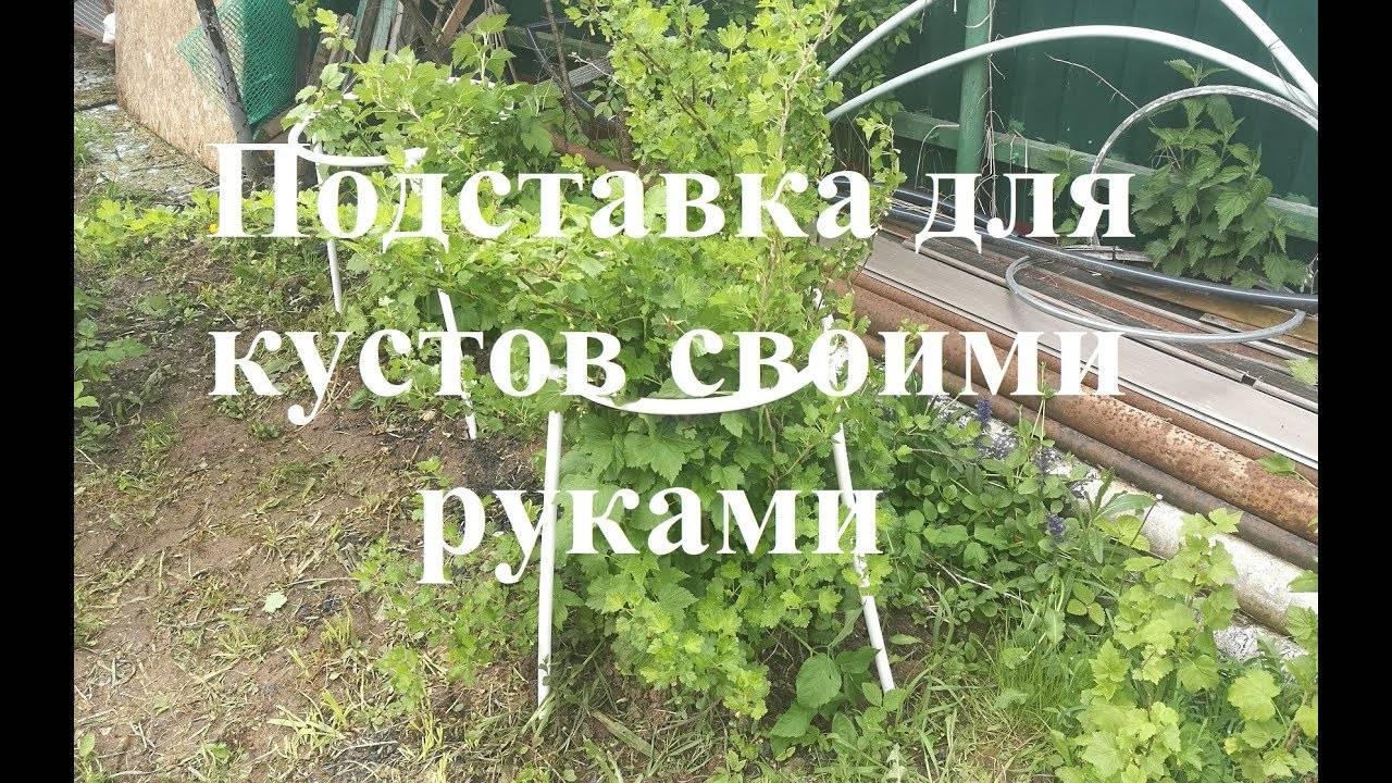 Кустодержатель для смородины (27 фото): виды и их назначение. как сделать держатель для кустов своими руками?