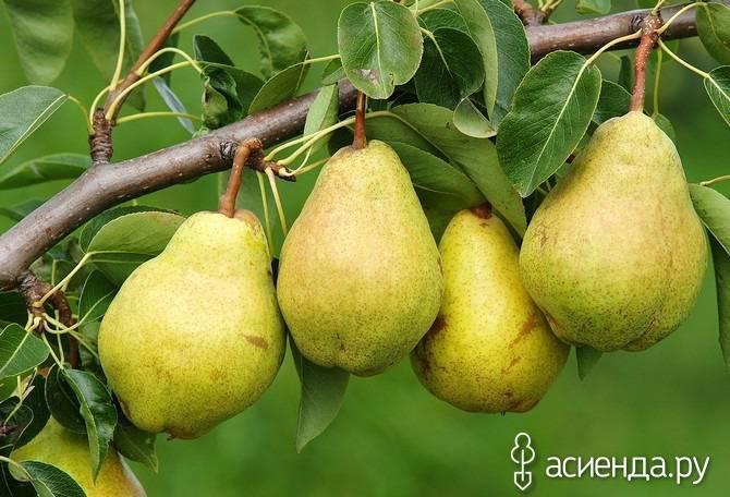 Все о плодовых деревьях и кустарниках для дачи: описание сортов и видов