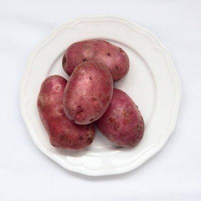Сорт картофеля «манифест» — описание и особенности выращивания