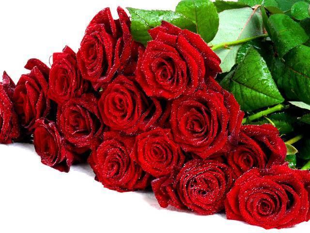 Об укоренении срезанной розы в домашних условиях: как сажать и прорастить