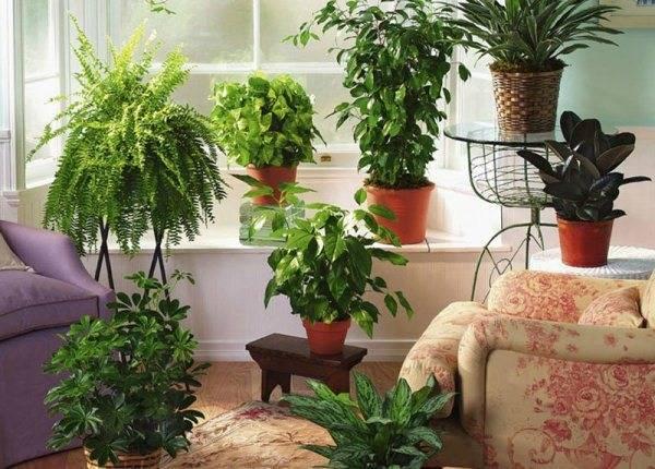 Комнатные растения с фиолетовыми и бордовыми листьями