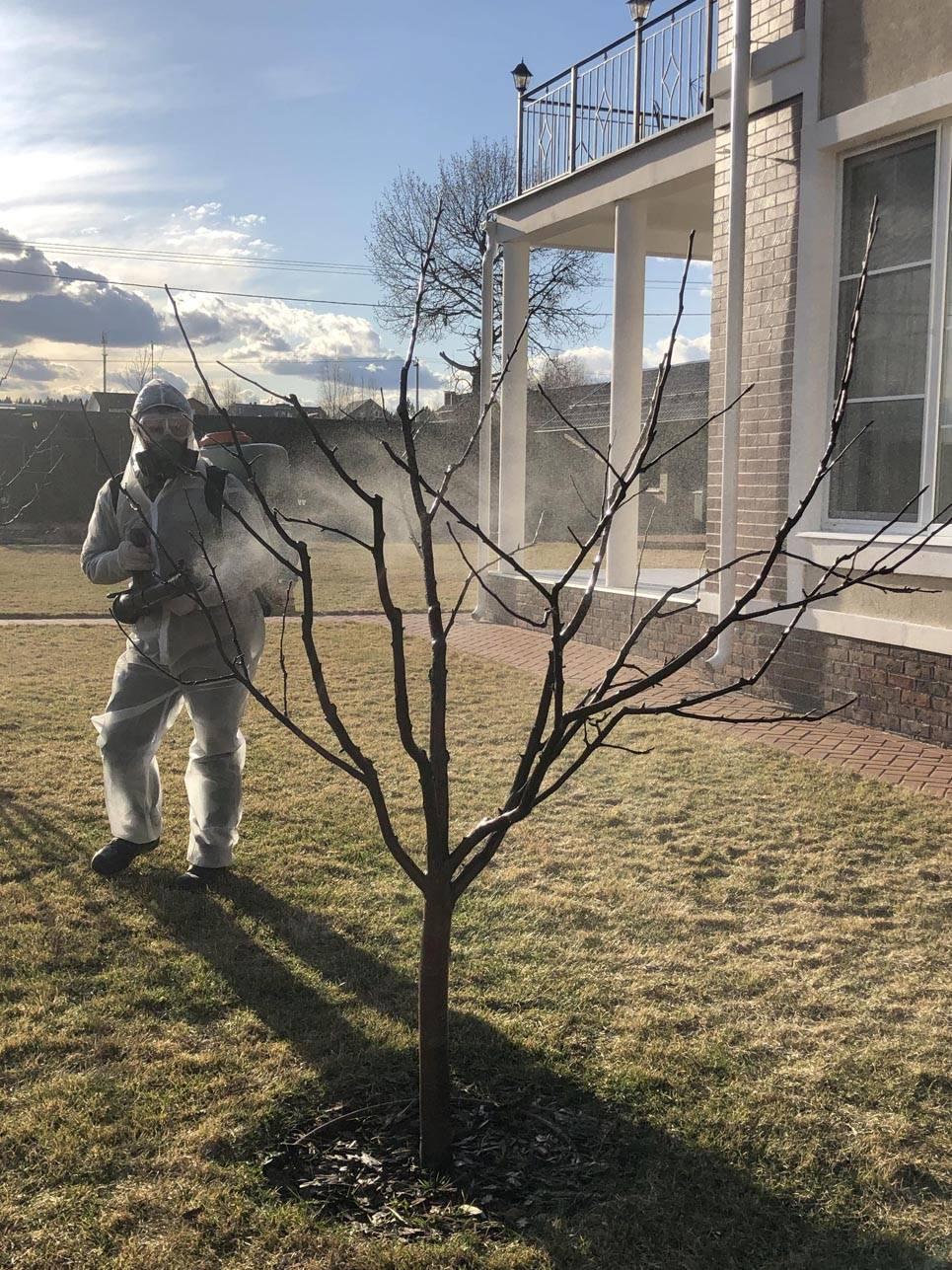 Весенняя обработка плодовых деревьев от болезней и вредителей