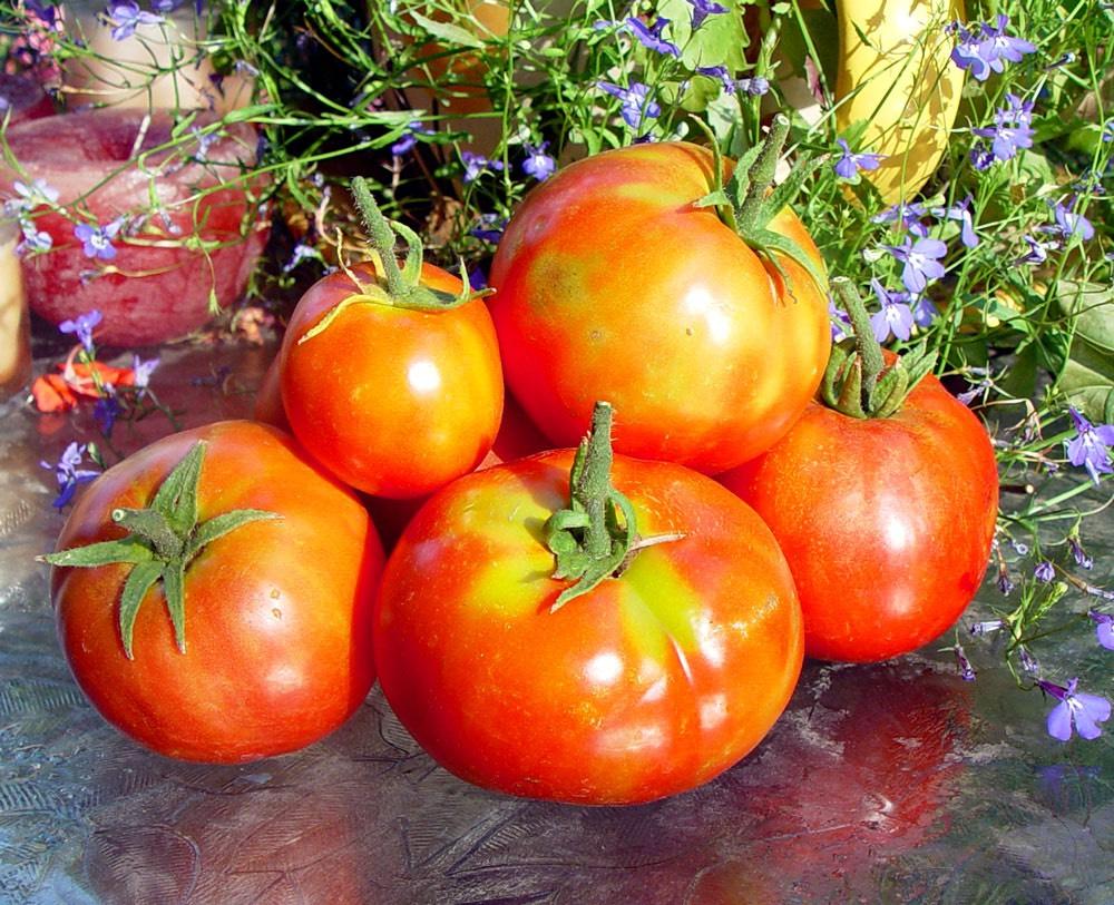 Как посадить огурцы под укрывной материал: чем укрыть огурцы в открытом грунте