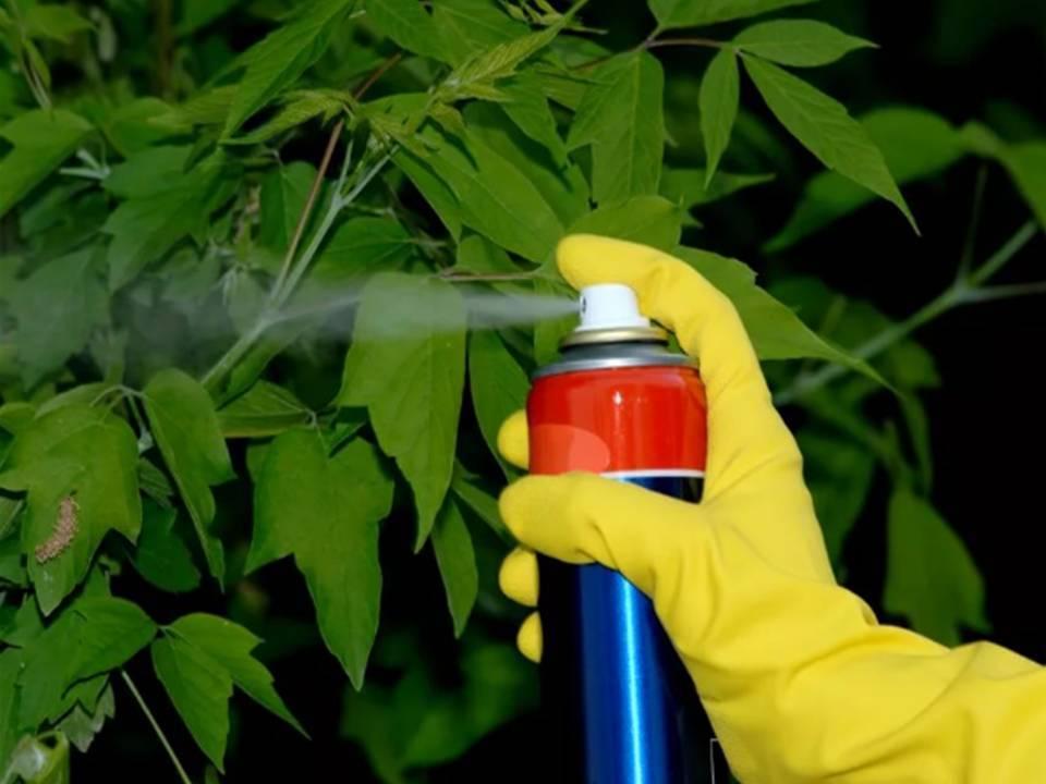 Как сделать чтобы дерево засохло незаметно. чем полить дерево, чтобы оно быстро засохло
