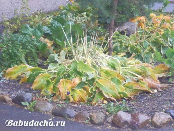 Что делать, если у юкки желтеют листья? по какой причине нижние листья сохнут зимой и как спасти пальму? уход за цветком в домашних условиях