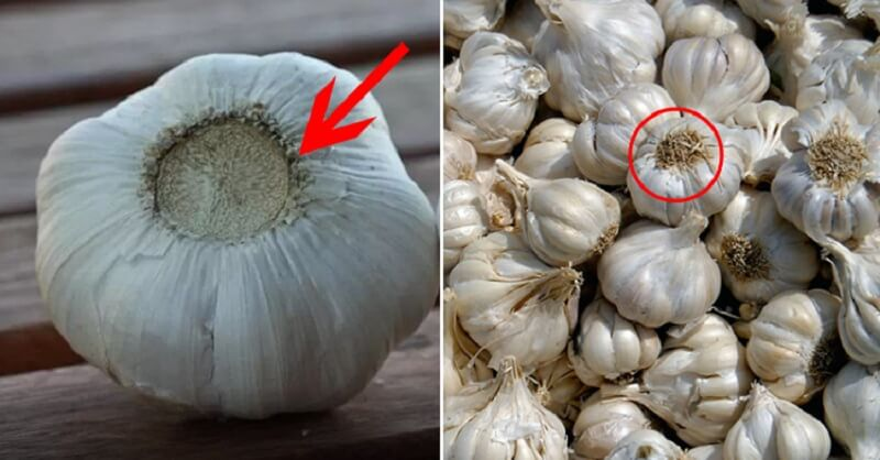 Китайский чеснок: выращивание