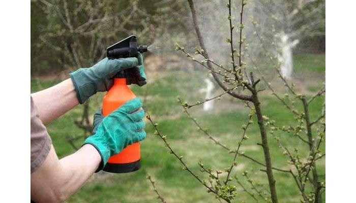Защити свой сад от болезни яблонь