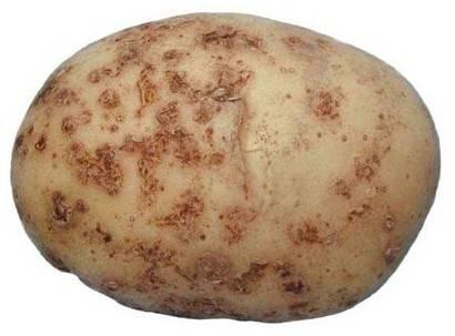 Болезни картофеля: описание, как бороться с ними