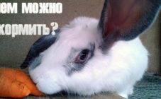 Как уберечь кроликов от жары