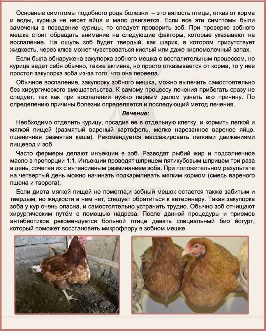 Лечить забитого зоба у курицы
