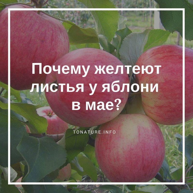 Яблоня: болезни и вредители, фото, гусеницы, тля, пятна на листьях