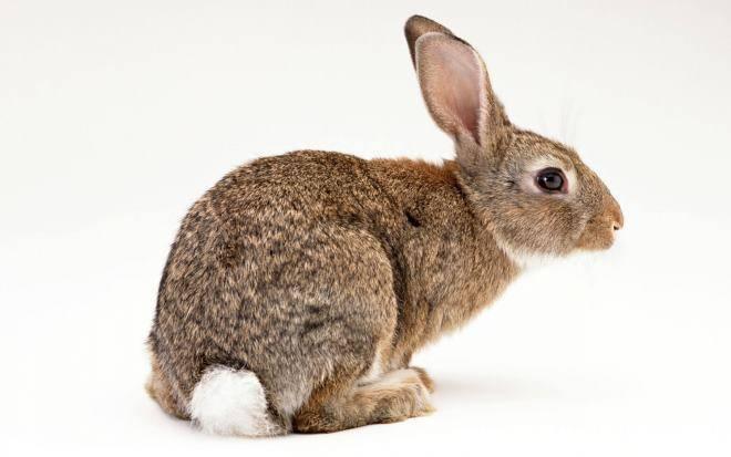 Что делать если кролик ничего не ест