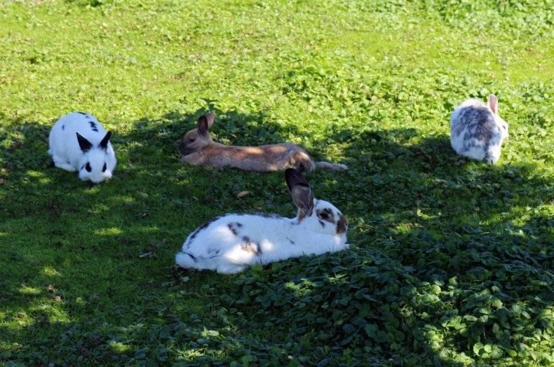 Солнечный и тепловой удар у кроликов, первая помощь зверькам