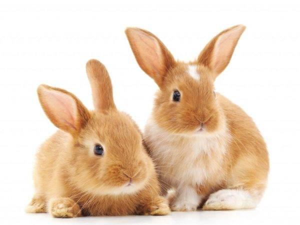 Как ухаживать за декоративными кроликами — основные правила