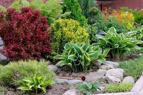 Растения для альпийской горки, фото | сажаем сад
