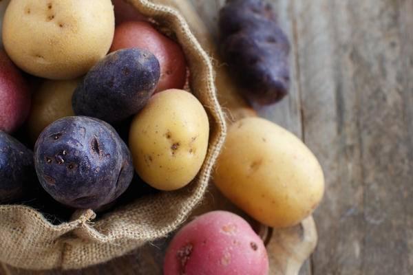 Свитанок киевский сорт картофеля. характеристика сорта картофеля «киевский свитанок». инструкция по выращиванию и уходу