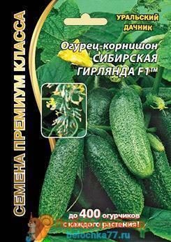 Выращивание огурцов в открытом грунте — рекомендации профессионалов