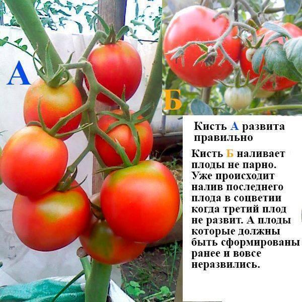 Монокалийфосфат внекорневая подкормка томатов