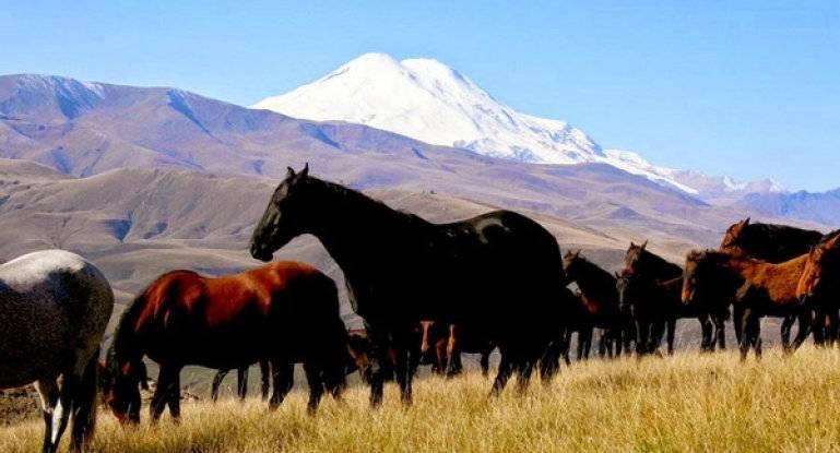 Древняя порода лошадей северного кавказа – кабардинская
